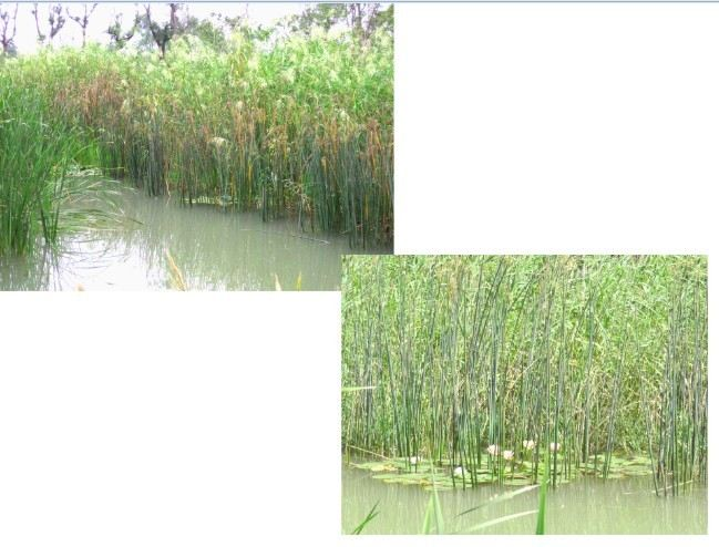 游客对洋湖湿地公园植物景观的偏好研究